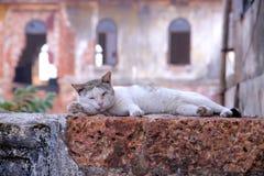 Gato na parede Fotos de Stock Royalty Free