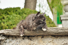 Gato na parede da casa Foto de Stock Royalty Free