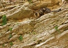 Gato na parede de pedra fotografia de stock