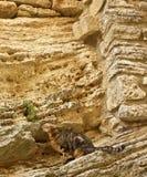 Gato na parede de pedra foto de stock