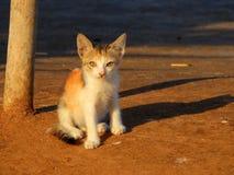 Gato na praia Mumbai de Carter Fotografia de Stock Royalty Free
