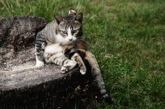 Gato na rocha Imagem de Stock Royalty Free