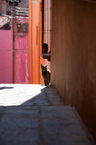 Gato na rua Imagem de Stock Royalty Free