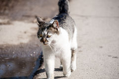 Gato na rua Foto de Stock