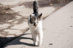 Gato na rua Imagem de Stock