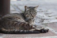Gato na rua fotografia de stock royalty free