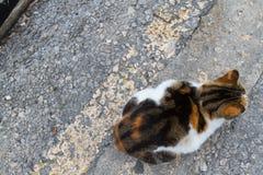 Gato na rua Fotografia de Stock