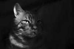 Gato na sombra Imagens de Stock