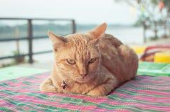 Gato na tabela Foto de Stock