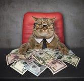 Gato na tabela com dólares imagem de stock
