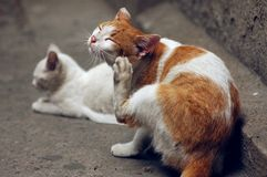 Gato na terra Fotografia de Stock