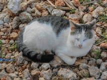 Gato na terra rochoso imagens de stock