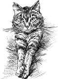 Gato nacional Fotografía de archivo