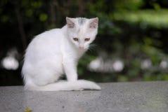 Gato nacional Imagen de archivo libre de regalías