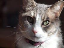 Gato nacional Foto de archivo