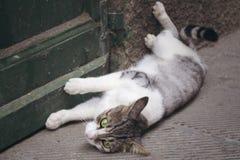 Gato nacional de ojos verdes que miente delante de puerta verde Fotos de archivo