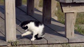 Gato nacional en el salvaje almacen de video
