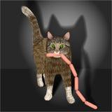 Gato nacional pelado gris con las salchichas Cazador de la noche Fotografía de archivo libre de regalías