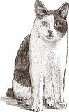 Gato nacional que se sienta Imagenes de archivo