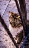 Gato nacional que se sienta con los ojos cerrados Foto de archivo