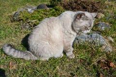 Gato nacional que se sienta por la charca foto de archivo