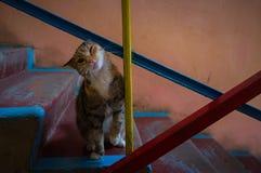 Gato nas escadas fotos de stock