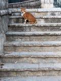 Gato nas escadas velhas fotografia de stock