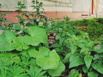 Gato nas folhas fotografia de stock