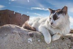 Gato nas ruínas antigas perto do castelo em Paphos, Chipre imagens de stock