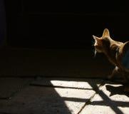 Gato nas sombras fotografia de stock