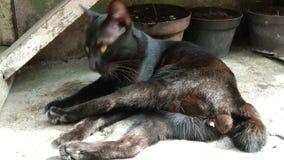 Gato negro único almacen de metraje de vídeo
