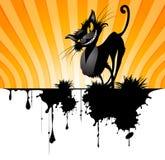 Gato negro Imagen de archivo