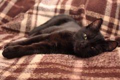 Gato negro. Fotografía de archivo