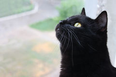 Gato negro. Foto de archivo