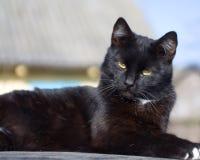 Gato negro Fotos de archivo libres de regalías
