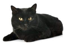 Gato negro Imagen de archivo libre de regalías