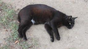 Gato negro almacen de metraje de vídeo