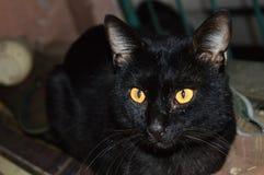 Gato negro Zdjęcia Stock