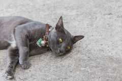 Gato negro Fotos de archivo