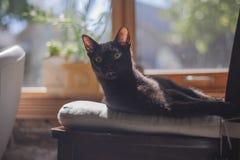 Gato negro Foto de archivo