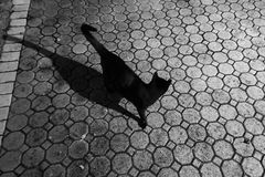Gato negro afuera con la sombra de la noche Foto de archivo libre de regalías