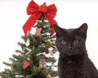 Gato negro con el árbol de navidad en fondo fotos de archivo
