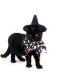 Gato negro con el sombrero de la bruja y el babero de Víspera de Todos los Santos Imágenes de archivo libres de regalías