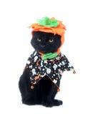 Gato negro con el sombrero de la calabaza Imágenes de archivo libres de regalías