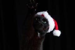 Gato negro con el sombrero de Papá Noel que aumenta su pata Imagenes de archivo
