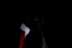 Gato negro con el sombrero de santa que mira al lado Fotografía de archivo