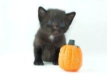 Gato negro con la calabaza Foto de archivo libre de regalías