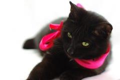 Gato negro con la cinta/el arqueamiento rojos aislados en blanco Foto de archivo libre de regalías