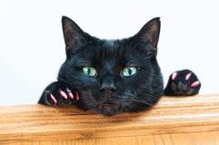 Gato negro con las garras rosadas Fotos de archivo