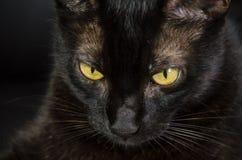 Gato negro con los ojos amarillos fotos de archivo